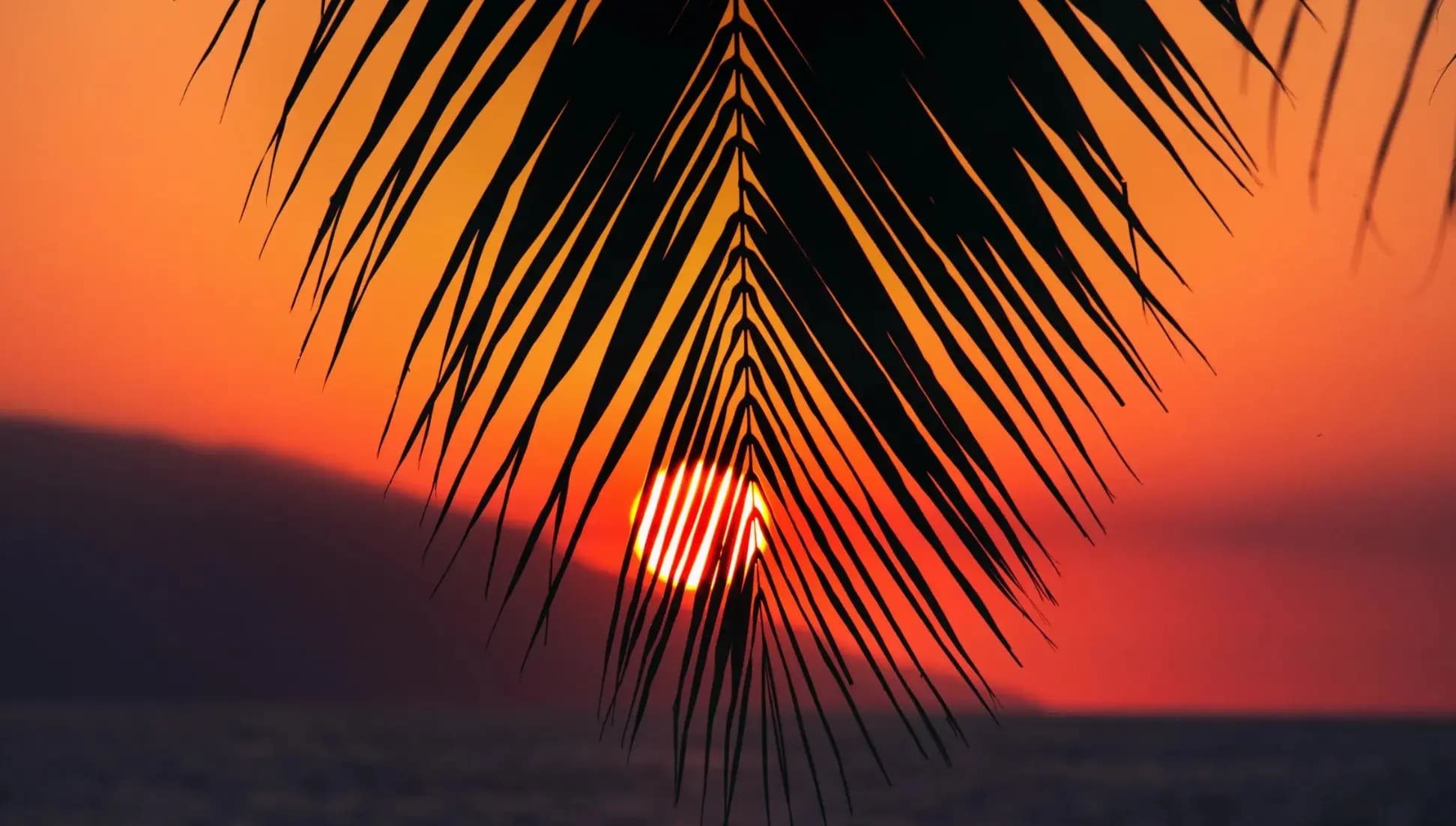 The sun sets behind a mountain with a palm leaf in the foreground.